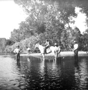 Bob Strauss on his horse in the Poudre River, c. 1900